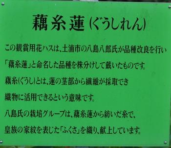 DSC_0138-1.jpg