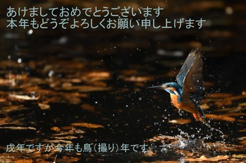 DSC_0764_01-1.jpg